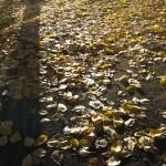 Høst i Kirkeparken.