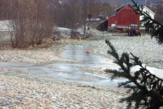 Mikkel (sen) rev rasker over isen.